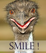 Image of smiling Emu by Carolyn Marshall